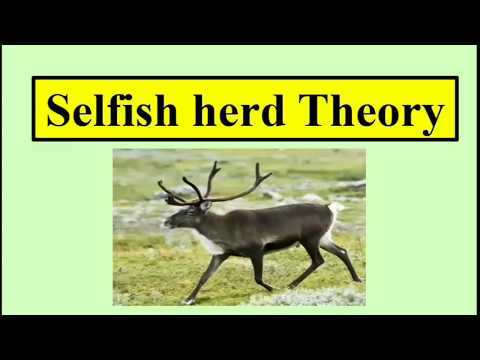 Selfish Herd Theory | Ecology