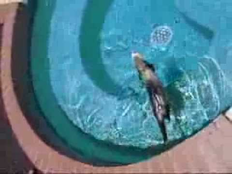 swimming ferrets youtube