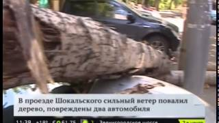 В СВАО из-за сильного ветра на машины упало сухое дерево(, 2015-07-06T11:07:34.000Z)