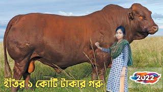 রাতারাতি ভাইরাল কোরবানির ১০ টি গরু | Top 10 Cows | Part 2 | ইতির গরু | Dipjol | ডন | Korbani | L2M