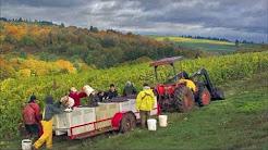Erath - A Year in the Oregon Vineyard