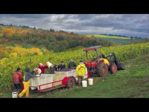 Erath - A Year in the Oregon Vineyard