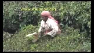 Munnar Travel Video: Tea Plucking (munnar.org)