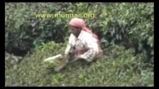 Munnar Travel Video: Tea Plucking (munnar.org)