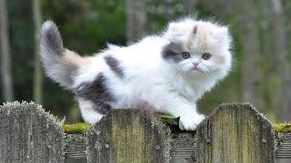 Необычный паразит, который приносят нам коты