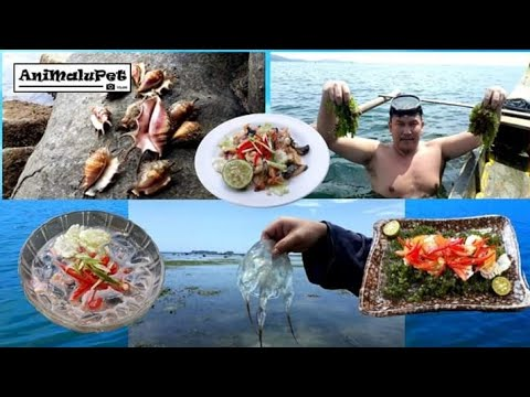 Catch, Clean, & Eat: Box Jellyfish, Sea Grapes  And Five Fingers Shell   Make Kinilaw Recipes