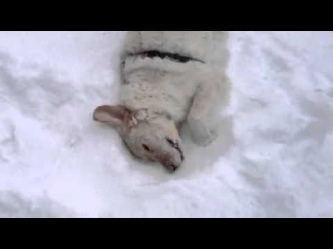 Giove e la neve fresca