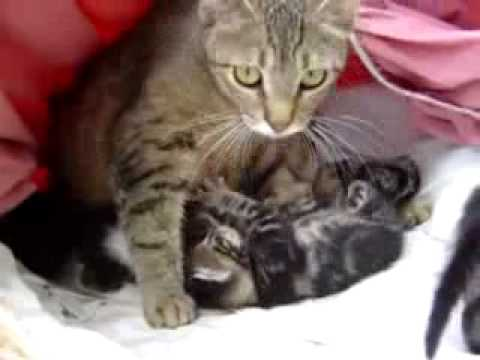 Momcats and Newborn Kittens - Precious!!!