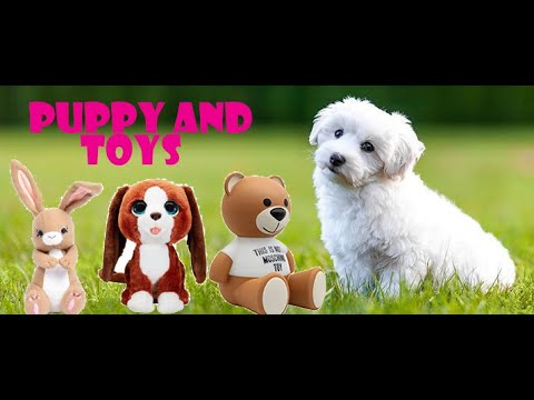 cute-lio-puppy-playing-with-toys