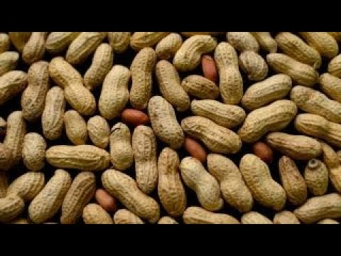 New potential treatment to prevent serious peanut allergy reactions