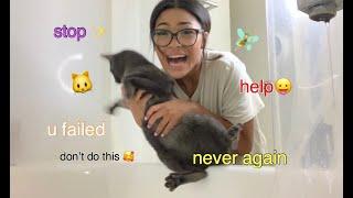 GIVING MY CATS A BATH *huge fail*