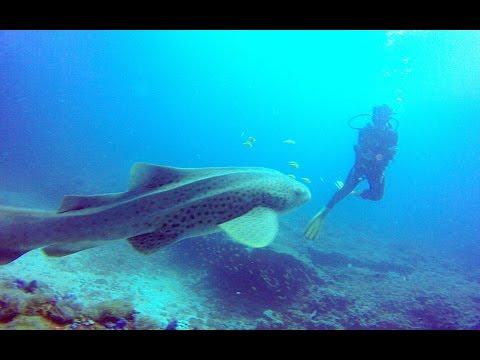 Mozambique, Tofo diving March 2015