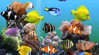 Tổng hợp những loài cá đẹp nhất đại dương  - Nhạc hòa tấu Guitar giúp thư giãn tinh thần - FULL HD