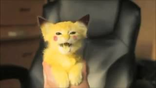 Котенок Пикачу/ Pikachu Kat