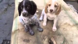 Видео щенки(, 2015-06-21T17:32:15.000Z)
