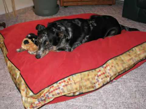 DogBlog Pet Bed Review