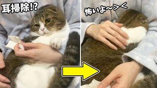 耳掃除が怖くてママに抱きつく猫