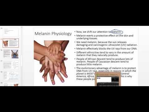 Melanin Physiology: Melanin Absoprtion of UV Light and Internal Conversion to Heat