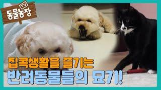 길어진 집콕생활을 즐기는 반려동물들의 신기한 묘기! I TV동물농장 (Animal Farm) | SBS St…