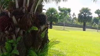 Treasure Crest EC is near Sengkang Riverside Park
