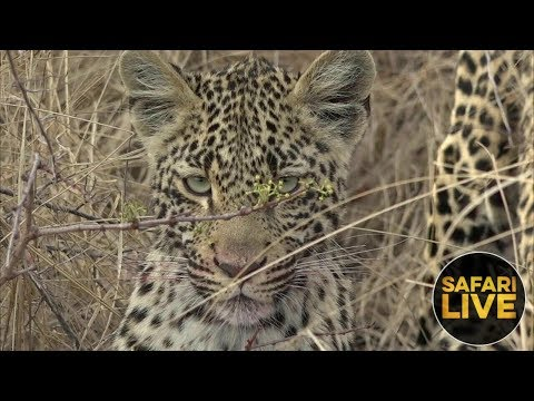 safariLIVE - Sunset Safari - October 4, 2018