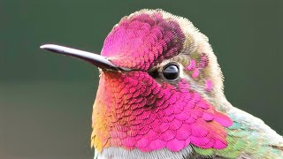 10 Most Spectacular Hummingbirds in the World