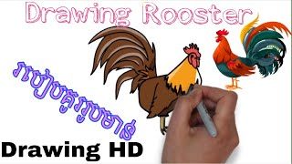 Rooster | Drawing rooster | Beautiful rooster | Rooster boxing | របៀបគូររូប