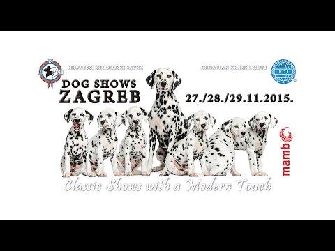 Dog Shows Zagreb 29.11.2015.
