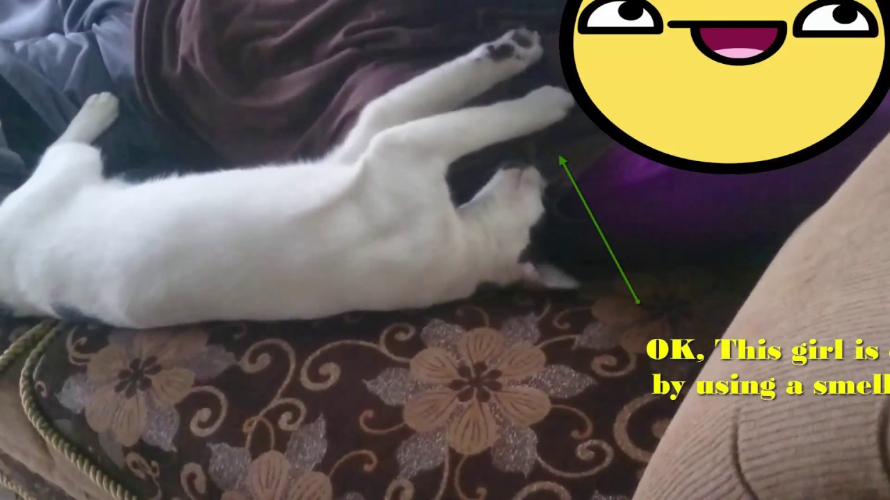 Funny Cats (Cemong) Like Man Armpits Smell - YouTube
