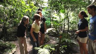 The Butterfly Conservatory - Virtual Tour