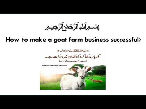 How to make a goat farm business successful | animal farm | farmers | goat farming business
