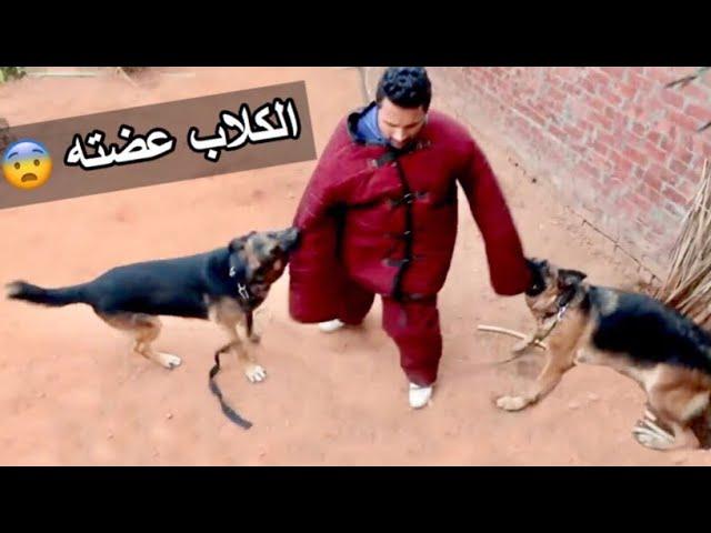 تحدى الموت (الكلاب عضته ) تانى مرة