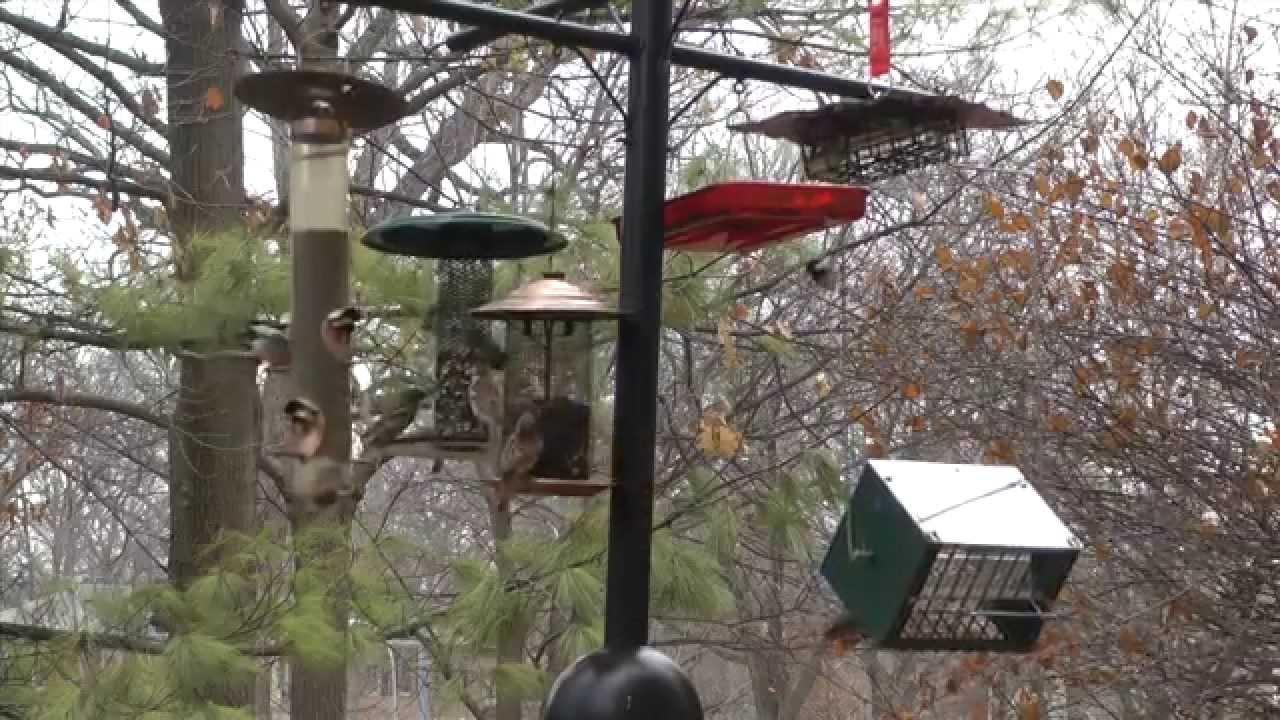 deb u0027s big backyard winter birds at your backyard feeder youtube