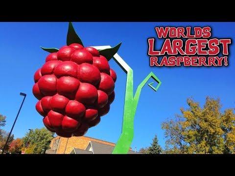 WORLDS LARGEST RASPBERRY. - Hopkins Minnesota - Day 8
