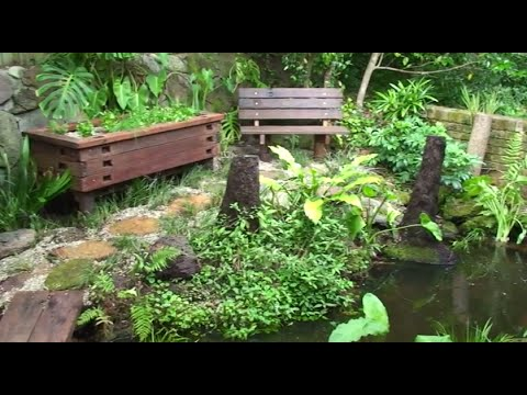 How to build an aquaponic pond system at home
