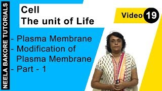 Cell - The Unit of Life - Plasma Membrane - Modification of Plasma Membrane - Part - 1