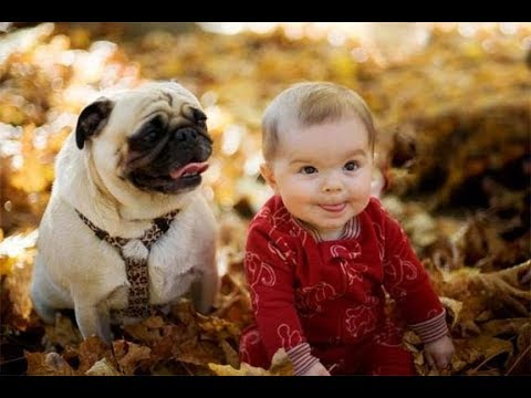 Baby Laughing At Dog Wagging Tail Dog With babies