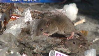 Крысы на Богаткова: продолжение сериала