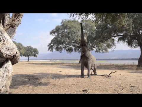 Photographic Workshop in Mana Pools National Park by Inspiration Zimbabwe