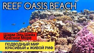 Египет Самый крутой риф в Шарм Эль Шейхе Снорклинг в Египте