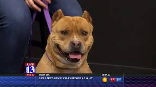 BRUTIS - Fox 13 Best Friend from the Humane Society of Utah