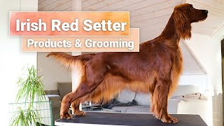 Grooming Part 3  Irish Red Setter  Products  So Posh