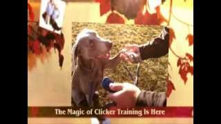 [clicker Training For Dogs] - How To Become A Super Dog Trainer