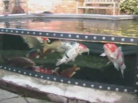 Koi pond with viewing screen window youtube for Koi pond window