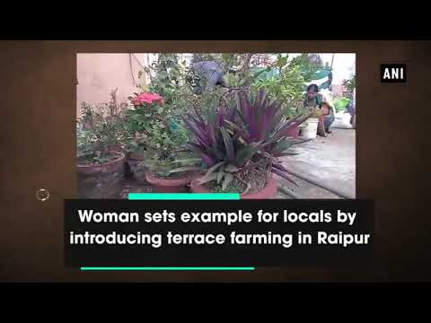 organic farming horticultural crops in roof top of  simple house wife at Raipur Chhattisgarh
