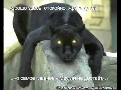 Черный кот за углом скачать песню