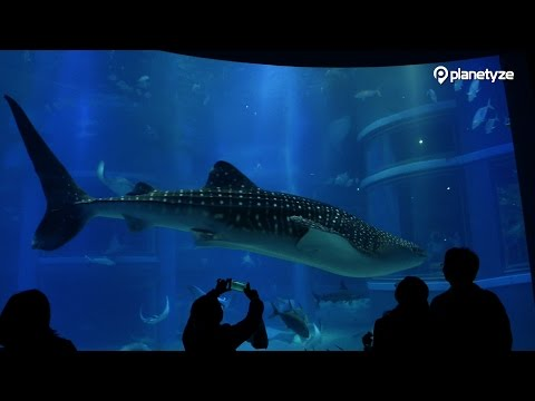 Osaka Aquarium Kaiyukan - One of the Largest Fish Tanks in the World.