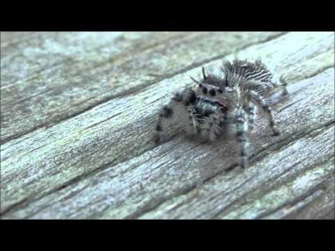 Giant Spider Attacks Camera