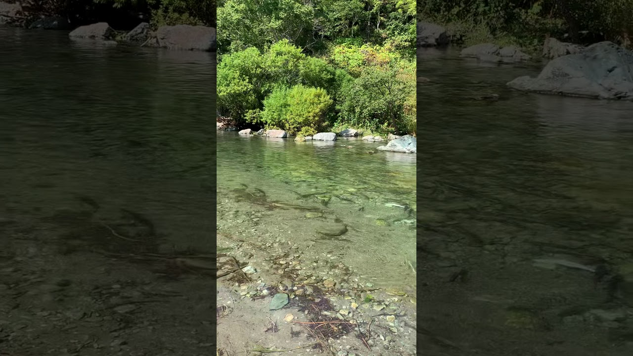 Осень, Сахалин река Анна