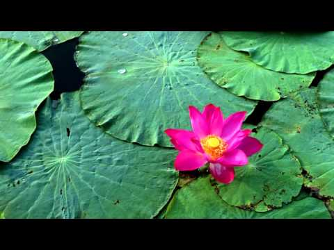 Meditation Sounds | Flowing Water & Singing Bowl | Sleep, Relax & Meditation